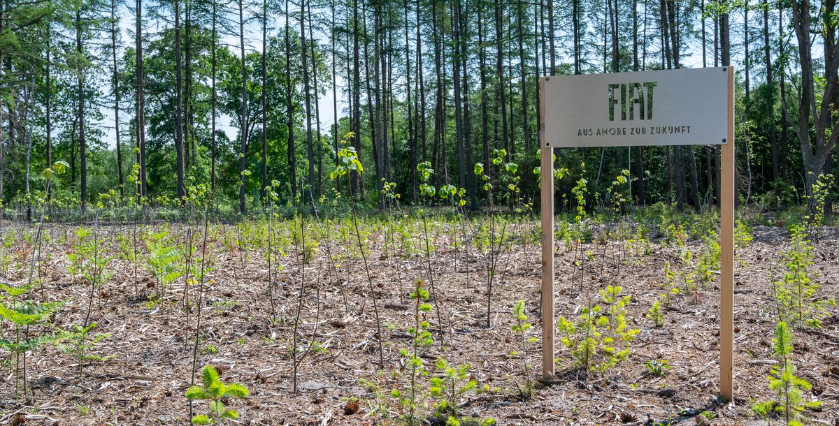 Aus Amore zur Zukunft – Fiat hat schon mehr als 10.000 Bäume gepflanzt